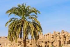 De tempel van Karnak in Luxor, Egypte. stock afbeelding