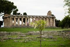 De Tempel van Neptunus, Paestum Stock Foto's