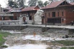 De Tempel van Pashupatinath stock foto