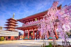 De Tempel van Sensoji stock afbeeldingen