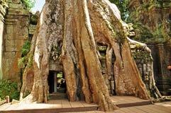 De tempel van Ta Prohm Stock Foto