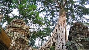 De tempel van Ta Prohm stock footage