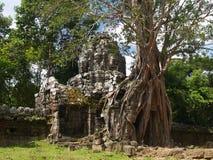De tempel van Ta Prohm Royalty-vrije Stock Afbeeldingen