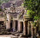 De tempel van Ta Prohm Stock Fotografie