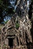 De Tempel van Ta Prohm, Anghor Stock Foto's