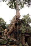 De Tempel van Ta Prohm in Angkor Royalty-vrije Stock Afbeelding