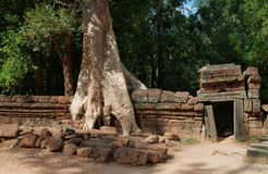 De Tempel van Ta Prohm. Angkor. Kambodja Royalty-vrije Stock Fotografie