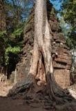 De Tempel van Ta Prohm. Angkor. Kambodja Stock Afbeeldingen