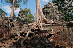 De Tempel van Ta Prohm. Angkor. Kambodja Royalty-vrije Stock Foto's