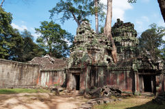 De Tempel van Ta Prohm. Angkor. Kambodja Stock Fotografie