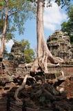 De Tempel van Ta Prohm. Angkor. Kambodja Stock Foto's