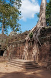 De Tempel van Ta Prohm. Angkor. Kambodja Royalty-vrije Stock Afbeelding