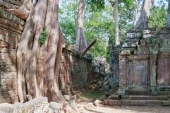 De Tempel van Ta Prohm. Angkor. Kambodja Royalty-vrije Stock Afbeeldingen