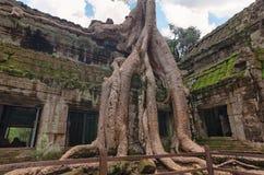 De Tempel van Ta Prohm, Angkor, Kambodja royalty-vrije stock afbeelding