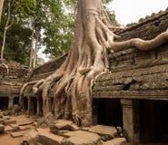 De Tempel van Ta Prohm in Angkor Thom Kambodja Royalty-vrije Stock Foto