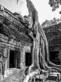De Tempel van Ta Prohm, Angkor Wat, Kambodja Stock Foto