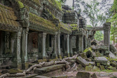 De Tempel van Ta Prohm, Angkor Wat, Kambodja Royalty-vrije Stock Foto's