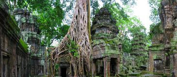De tempel van Ta Prohm, Kambodja royalty-vrije stock foto