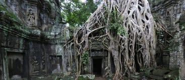De tempel van Ta Prohm, Kambodja stock afbeeldingen