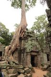 De Tempel van Ta Prohm met banyan boom Royalty-vrije Stock Fotografie