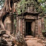 De tempel van Ta Prohm met reuze banyan boom in Angkor Wat royalty-vrije stock foto's