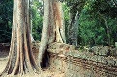 De Tempel van Ta Prom in Angkor stock afbeeldingen