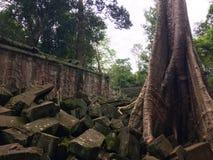 De Tempel van Ta Prom in Siem oogst Kambodja royalty-vrije stock foto's