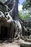 De tempel van Wat Ta Prohm van Angkor Royalty-vrije Stock Fotografie