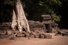 De tempelruines van Ta Prohm Royalty-vrije Stock Afbeeldingen
