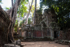 De tempelruines van Ta Prohm Stock Fotografie