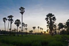 De Tempels van Angkor Stock Foto's
