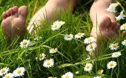 De tenen van de zomer Stock Fotografie