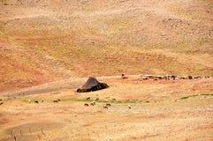 De tent van Tuareg in Marokko Stock Afbeeldingen