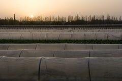De tentlandbouwbedrijf van de landbouw Stock Fotografie