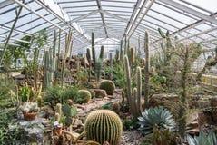 De tentoonstelling van cactusseninstallaties royalty-vrije stock afbeelding