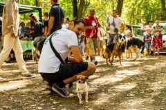 De tentoonstelling van honden van alle rassen Stock Afbeeldingen