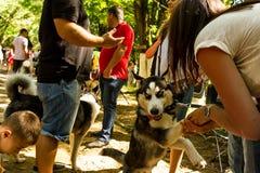 De tentoonstelling van honden van alle rassen Royalty-vrije Stock Foto's