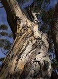 De termieten bepalen overleving Stock Fotografie