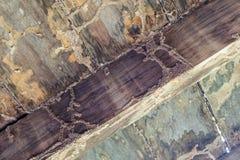 De termieten eten houten vloer Stock Foto