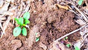 De termieten herstellen het is schadekolonie stock video