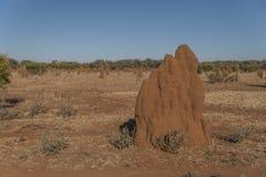 De termieten van de kathedraalhoop Royalty-vrije Stock Foto's