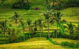 De Terrassen van de Jatiluwihrijst - Bali Stock Foto's