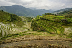 De Terrassen van de Longjirijst in China Stock Afbeeldingen
