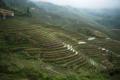 De terrassen van de Longshegrijst (China) Royalty-vrije Stock Afbeeldingen