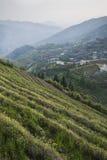 De terrassen van de Longshegrijst (China) Royalty-vrije Stock Fotografie