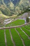 De terrassen van de rijst Stock Afbeeldingen
