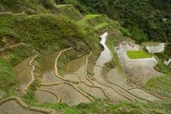 De terrassen van de rijst Stock Foto