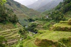 De terrassen van de rijst Stock Afbeelding