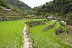De terrassen van de rijst Stock Fotografie