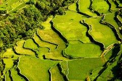 De Terrassen van de rijst Stock Foto's